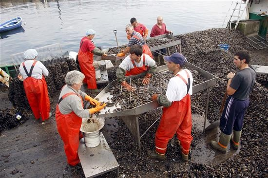 Predecir mareas rojas  A Coruña, 23 may (EFEverde).- Investigadores gallegos y catalanes trabajan en el desarrollo de un sistema para predecir la proliferación de algas nocivas, popularmente conocidas como mareas rojas, que persigue reducir las pérdidas que éstas producen en hasta un 50 por ciento por batea.