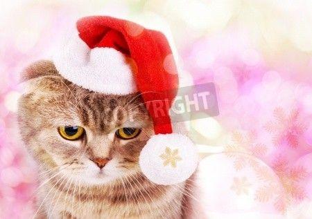 カラフルな背景にサンタ クロースの帽子でかわいいクリスマス猫