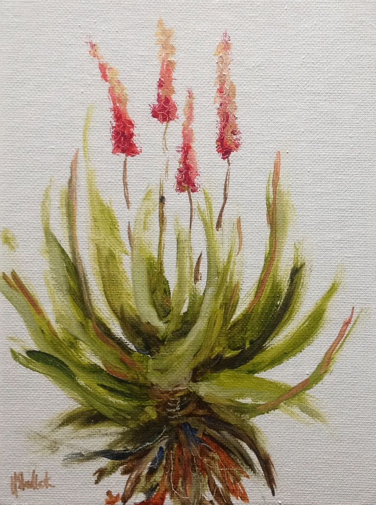 """Winter aloe #593"" daily painting by Heidi Shedlock"