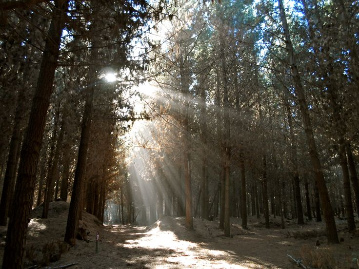 Woodend Beach Holiday Park. Forest, sunlight, trees, leaves...