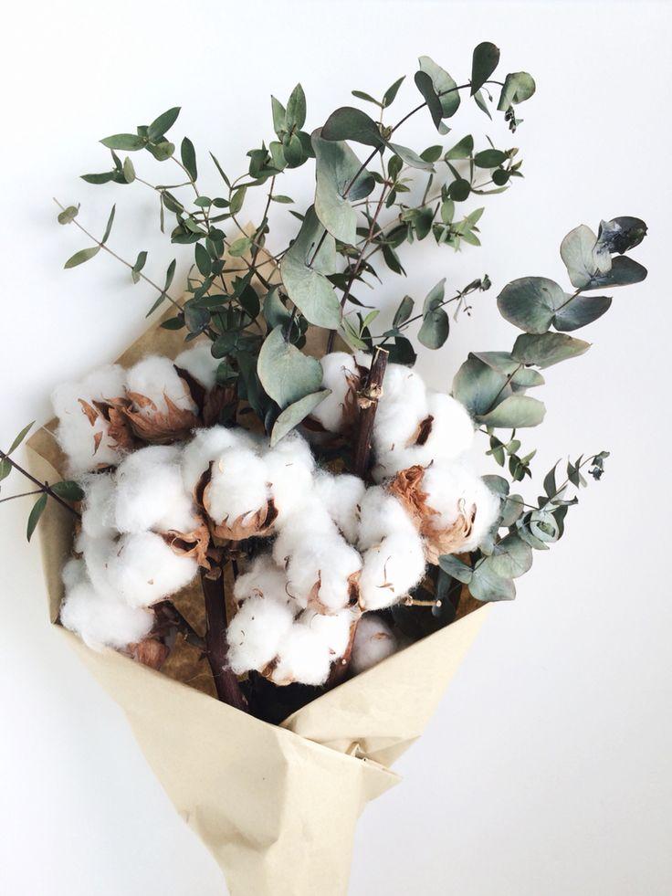 Fluffy cotton and eucalyptus