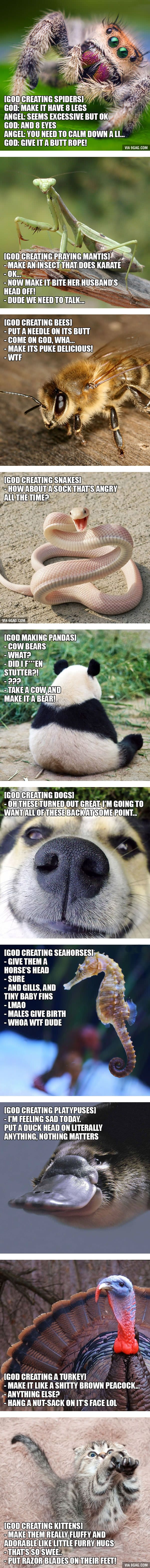 Here's How A Thoughtful God Creates Animals