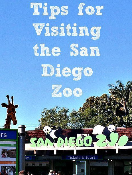 A few weeks ago, we escaped the Boston winter and headed out on a family vacation to San Diego. Our first stop? The famous San Diego Zoo, where my kids were eager to see turtles, …