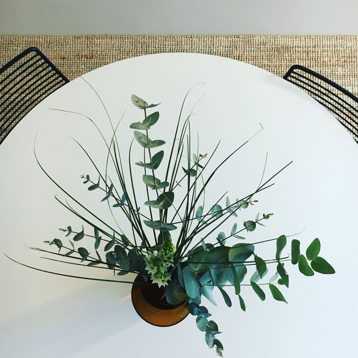 Eucalyptus ❤