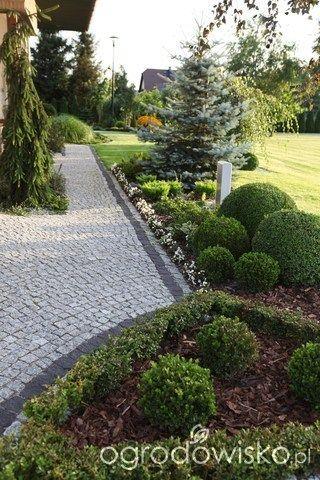 Ogród Dominiki - strona 4 - Forum ogrodnicze - Ogrodowisko