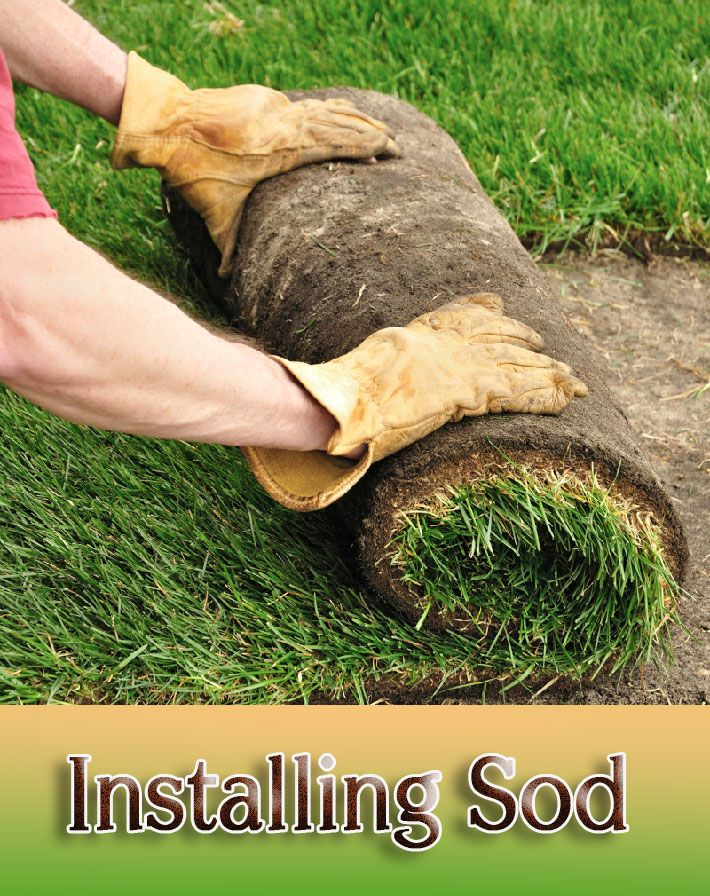 Diy How To Install Sod For A New Lawn Sod Installation Lawn