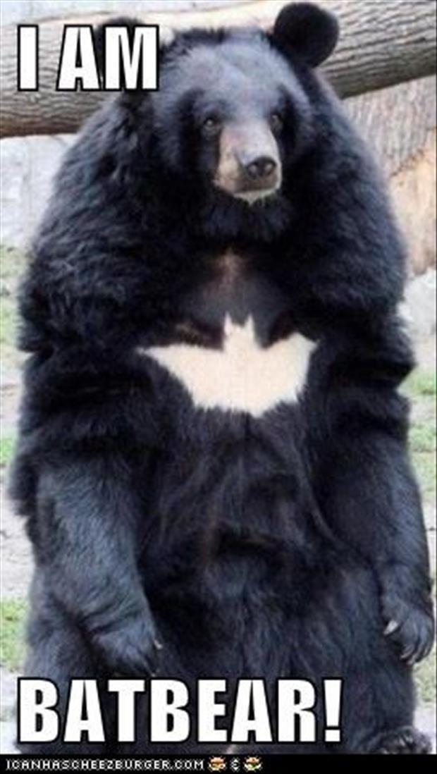 I am batbear.