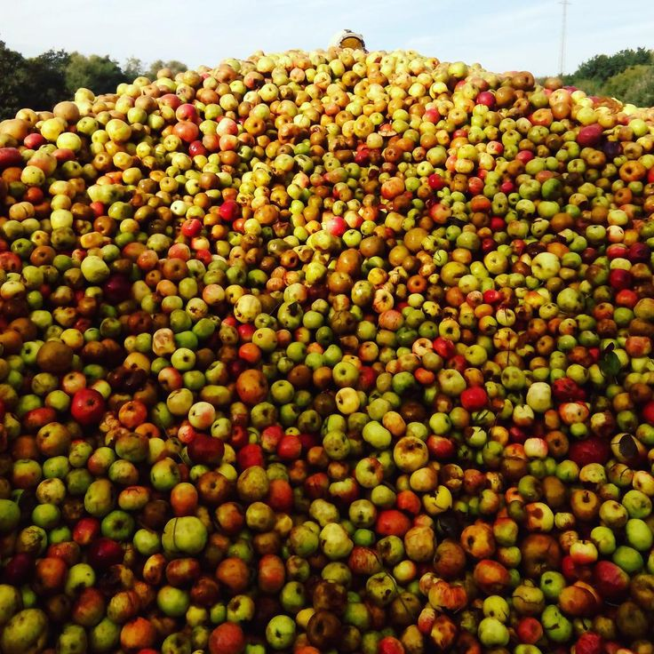 Olor a #manzana invade #villaviciosa #apples running in #cidermill comenzando a #mayar #sidra #asturias #sidraturismo