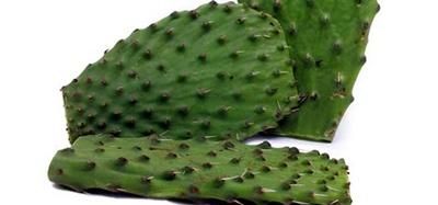 Cactus Leaves (Nopales)