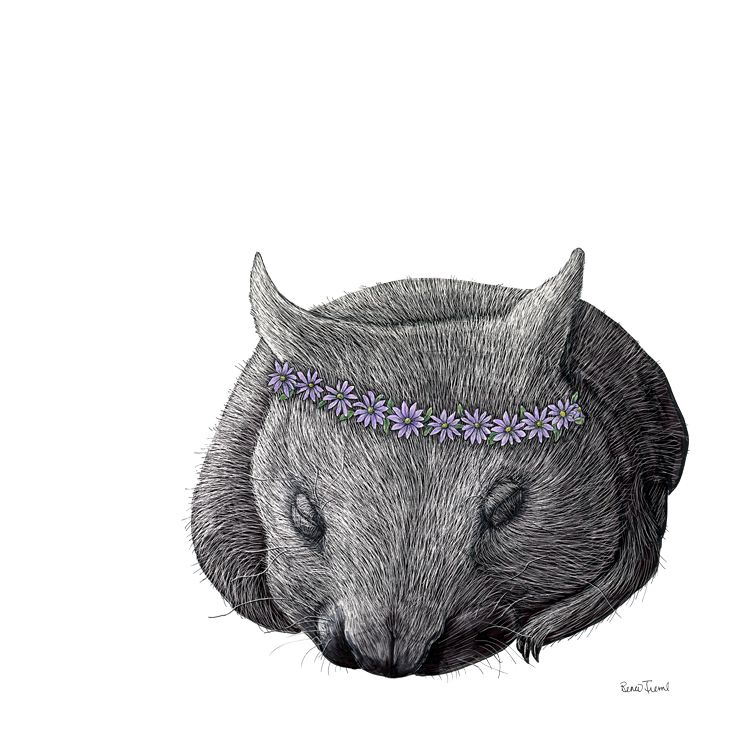 Renee Treml – Marguerite wombat illustration on scratchboard, available on fine art paper or eco-friendly wood veneer • Available at thebigdesignmarket.com