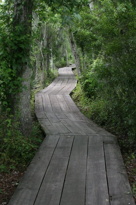 The Trail to the bayou in Louisiana. I want one like this... sigh...