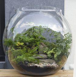 Mini gardens - Terrarium