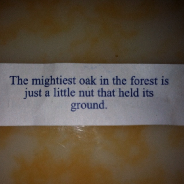 """Fortune Cookie """"The mightiest oak in the forest is just a little nut that held its ground."""""""