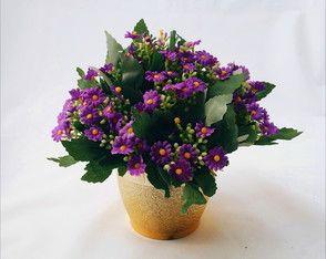 ARRANJO flores kalanchoe.