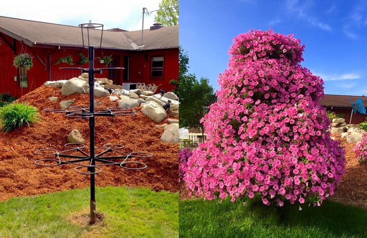 """We absolutely love to sit and watch the traffic drive by our store and """"rubberneck"""" when they see all the flowers. One of our main attractions every year is our petunia """"tree."""" At over 6 feet tall, it is just a mass of flowers and certainly grabs your attention when driving by.Going back 30 some years, my dad had the metal frame fora petunia tree built by a local named Art Sheels. He welded upa fewof them and sold them to at least 3 individual..."""