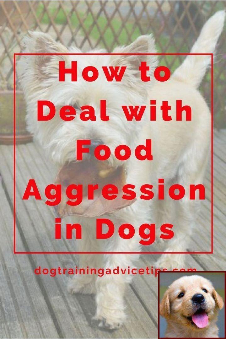Potty Training A Girl Puppy And Dog Behavior Ears Trainingdogs