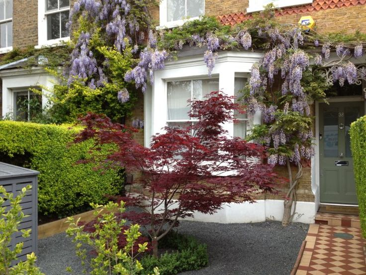 london front garden with wisteria - Garden Ideas London