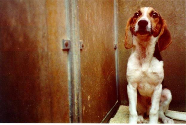 L'iniziativa legislativa popolare Stop Vivisection ha bisogno di noi per porre fine alla #sperimentazione sugli #animali! In Italia servono un milione di firme, da raggiungere entro 52 giorni.  Circa 620.000 persone hanno già firmato, manchi solo tu! → www.StopVivisection.eu/it  Foto: una delle immagini raccolte dalla BUAV nell'investigazione sotto copertura (SECRET) SUFFERING.
