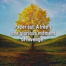 Paper cuts - a tree's one glorious moment of revenge.