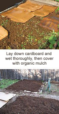 How to Garden in Weedy Areas - very clear instructions