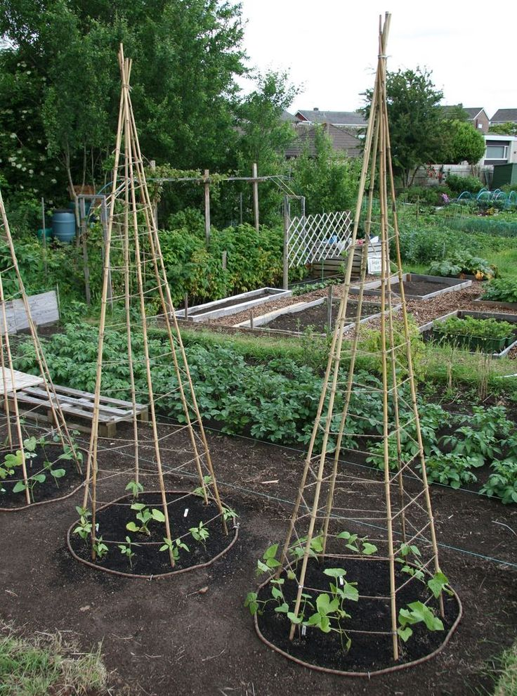 small space version of the bean tee pee. Your poles can be wood or bamboo. You want to use 5-6 poles that are at least 6 -7 feet tall. Make a tee pee out of them and tie them at the top.