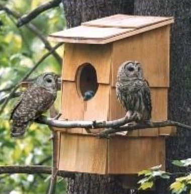 36 best bird houses and feeders images on pinterest | bird houses