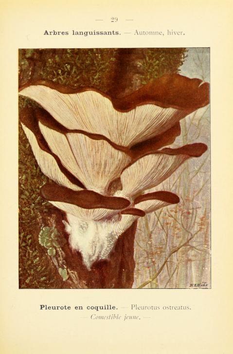 Nouvel atlas de poche des champignons comestibles et vénéneux, Paul Dumee, 1912.