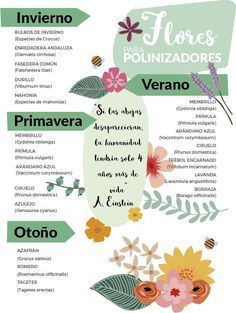 CÓMO ATRAER BIODIVERSIDAD A TU JARDÍN: POLINIZADORES | Los polinizadores, como las abejas o abejorros, tienen un papel fundamental en la fecundación y producción del fruto en muchos vegetales debido al proceso de polinización que realizan. Las abejas tienen un papel importantísimo en el ecosistema, pues casi un 80% de las plantas con flor dependen de ellas para llevar a cabo la polinización. via: @planteaenverde