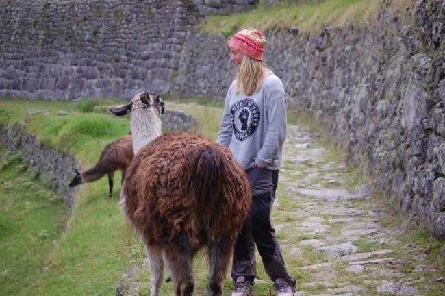 Flygstolen.se Blogg med resguider, erbjudande, gästbloggare och mycket mer #South #America #Sydamerika #Travel #Adventure #Äventur #Resa #Resmål #Peru #MachuPicchu #Machu #Picchu #Wonders #Of #The #World #Världens #sju #Nya #Underverk #lama