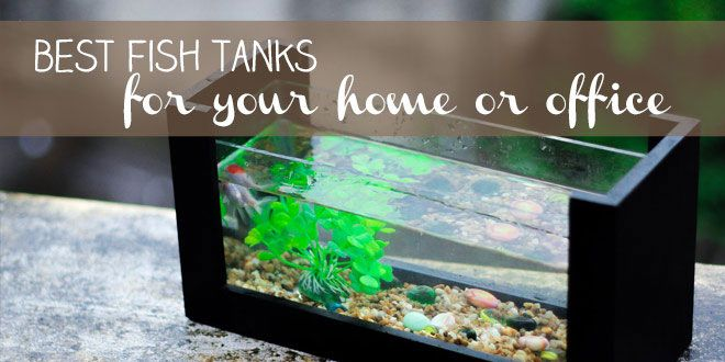Best Fish Tank For Your Home Or Office Betta Fish Tank Fish Tank Cool Fish Tanks