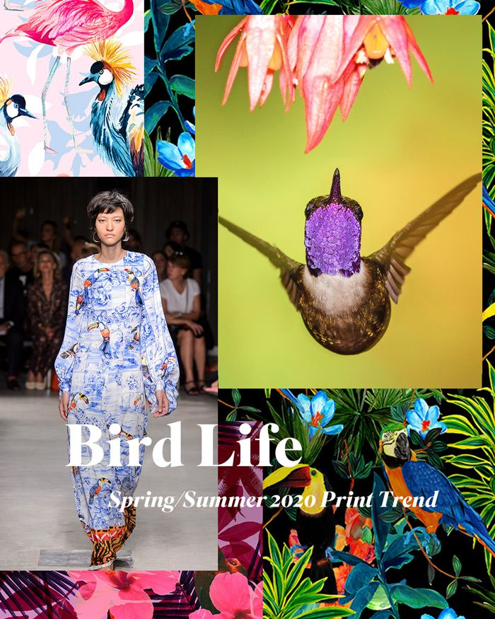 Pattern Trends 2020.Spring Summer 2020 Print Pattern Trend Bird Life 2020