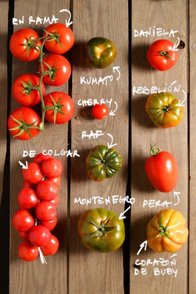 Tomate El Aliado De La Dieta Durante El Verano Tomate Tipos De Verduras Tipos De Perilla