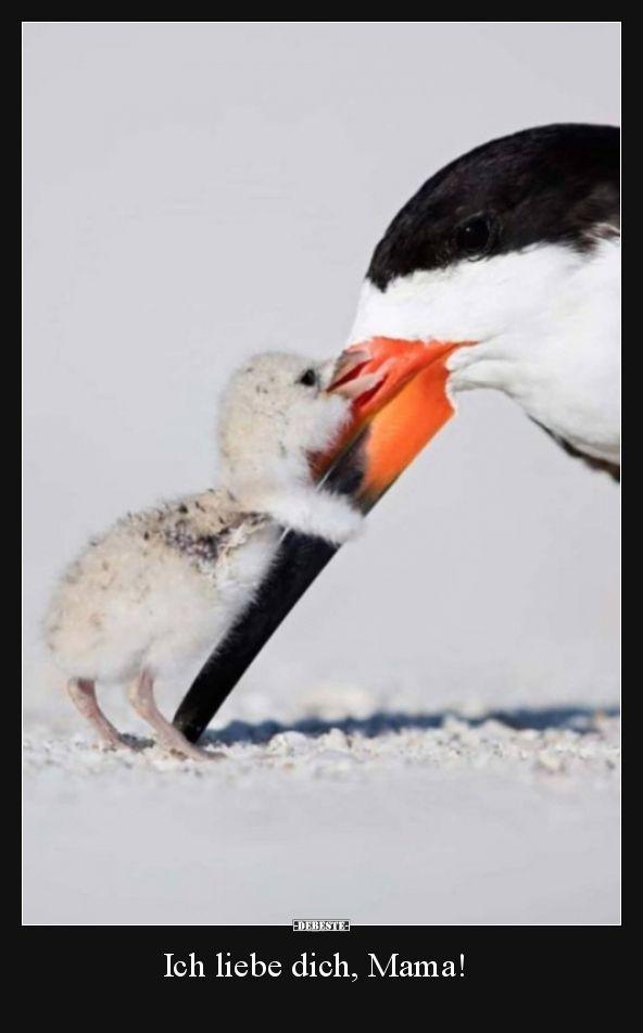 Je t'aime maman!   Images drôles, dictons, blagues, vraiment drôle   – Misc