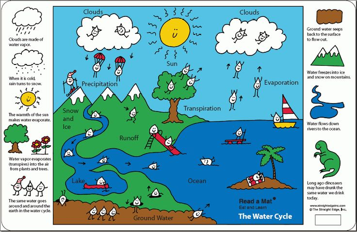 C2 W4 Science - Super Cute Water Cycle for Kids: Free Printable diagram placemat!