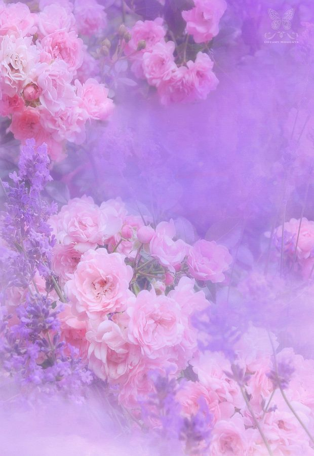 Roses Lavender By Jasna Matz On 500px Another Misty Soft D40 105mm Macro Pinterest Purple And Pink