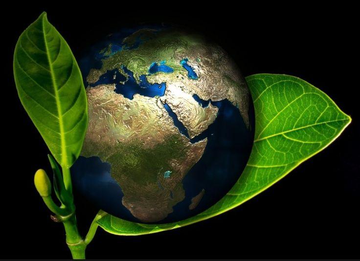 Журнал Environmental Research Letters опубликовал статью с прогнозами ученых относительно растительной пищи, от которой главным образом зависит здоровье и жизнь людей.   .    Специалисты считают, что человечество ожидают тяжелые времена: ухудшение экологии и глобальные климатические изменения приведут к тому, что урожаи и растительная продукция будут становиться все менее питательными..  .  Читайте тут…