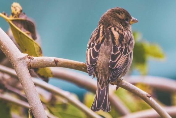 Birds in Spring by SteelmarkPix on Etsy