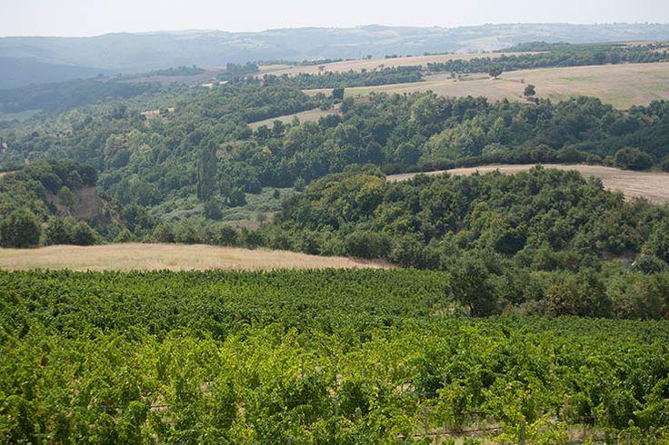 Pieria Eratini Winery στην πόλη Kolindros City