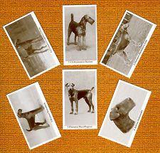 Эрдельтерьер назван комплект из 6 собаки фото торговые карты