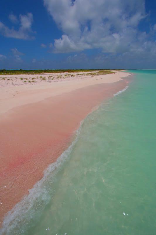 Barbuda Pink Beach Travels Pinterest