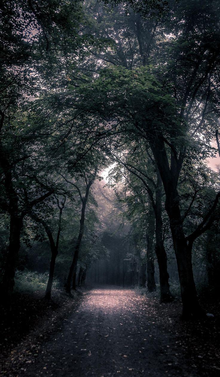 'Path In Hampstead Heath, London' Freddie Ardley ...