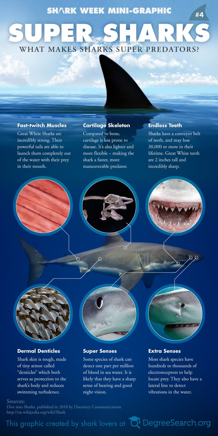 Sharks have been around for about 450 million years, but haven't need to evolve much over the past 208 million years. Why? Because they are the perfec