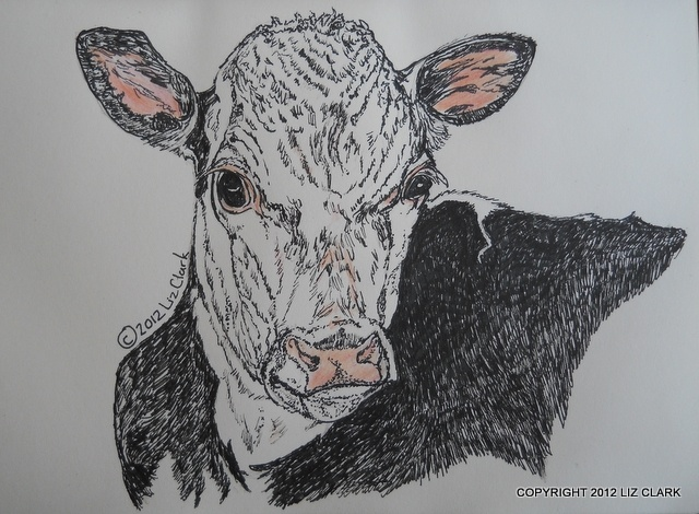 Just a quick scribble of a beef cross calf that I did, when I was sitting in a doctor's waiting room! LOL