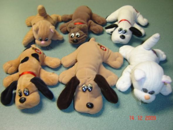 Pound puppies and Pound purries!