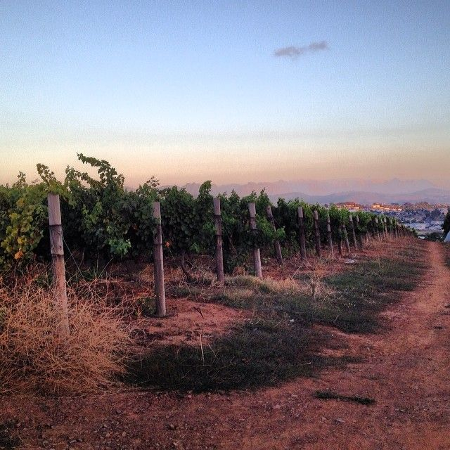 Magic Forest - Trail run late afternoon in the vineyards. The good life!|TheOneK.com