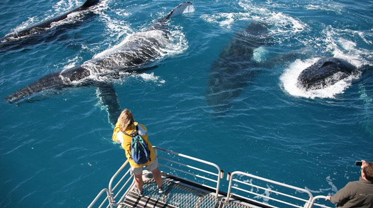 Whale watching in Queensland, Australia. Tasman Venture have some great whale facts here: http://www.tasmanventure.com.au/whale-watching.html