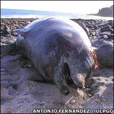 Beaked whales: Sounding off. Naval sonar has been blamed for beaked whale strandings