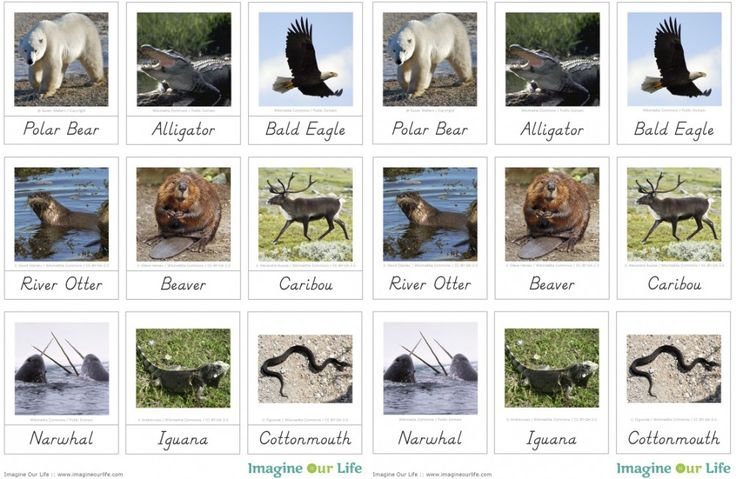 Free Animals of North America Printables from Imagine Our Life