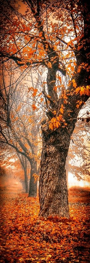 Beautiful fall tree