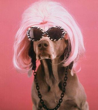 Joan Rivers from .....Anthropomorphising Weimaraners: Artist Goes To The Dogs For Top Ten